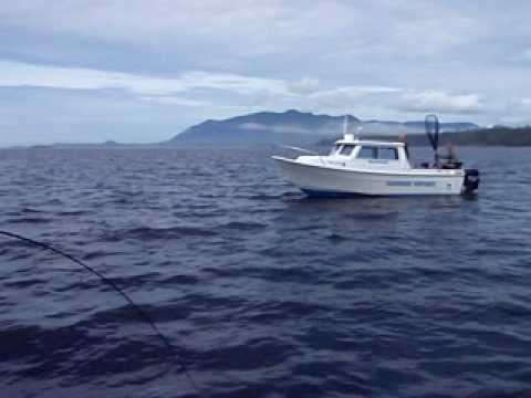 Tofino B.C. Coho Salmon on 6wt Fly Rod offshore