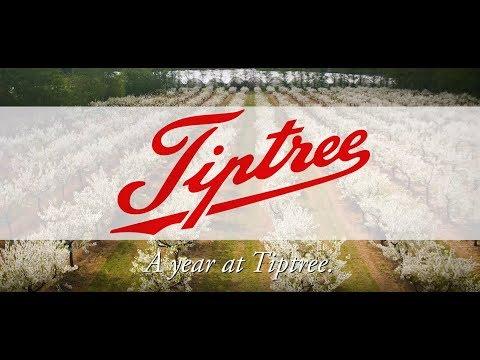 A Year at Tiptree