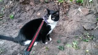 ЧЕРНО БЕЛЫЙ кот СТЁПКА 15 - коты не любят перемен! весь лес по попили!