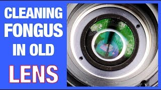 How to Remove Fungus from a Camera Lens (EASY)
