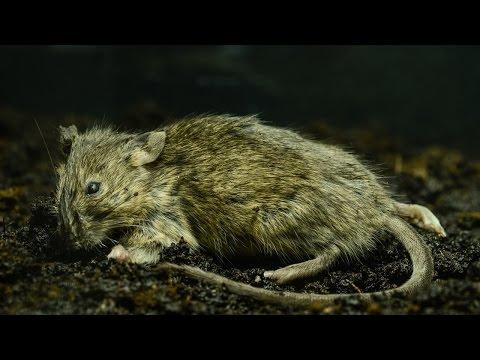 Mouse Decomposition Timelapse | XO artworks