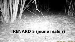 Renard visite un trou 3