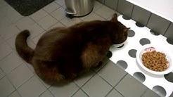 Dali kissan opetusvideo, miten matolääke otetaan, otos 2
