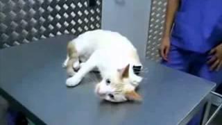 Como desactivar un gato
