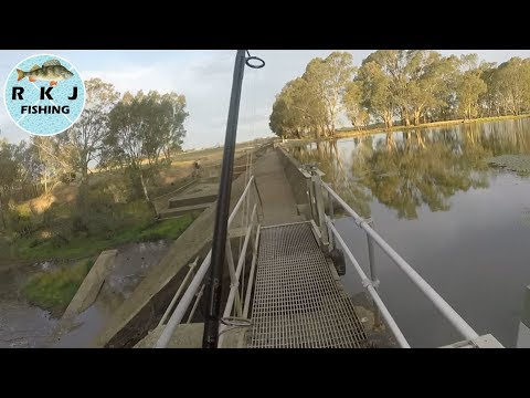 Yellowbelly And Murray Cod Fishing - Re-learning A Familiar Spot