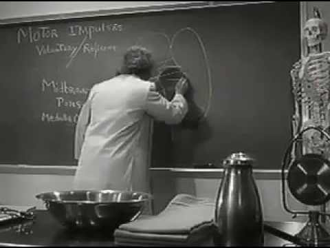 Young Frankenstein Central Nervous System Lecture
