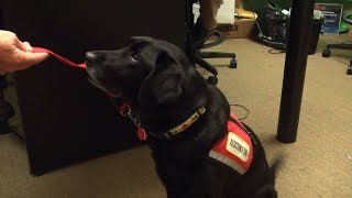 Dog Trained To Help Veterans Visits Boston Herald