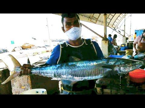 Cutting Huge KingFish   Fish Cutting Skills