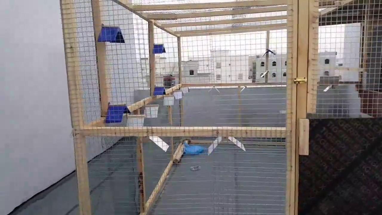 بناء قفص للحمام الكويتي في صلاله الباروتي Youtube
