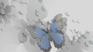 Greg Amici - Cynthia, Come to Me (Lyric Video)