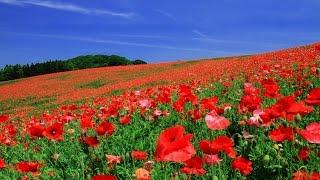 2014年10月8日発売 瀬川瑛子さんの「契り花」を歌ってみました。 作詞:...
