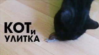 Улитка вскружила коту голову :)