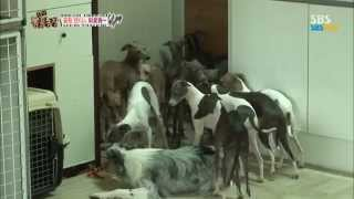 SBS [동물농장] - 꼴등캔디는 외로워