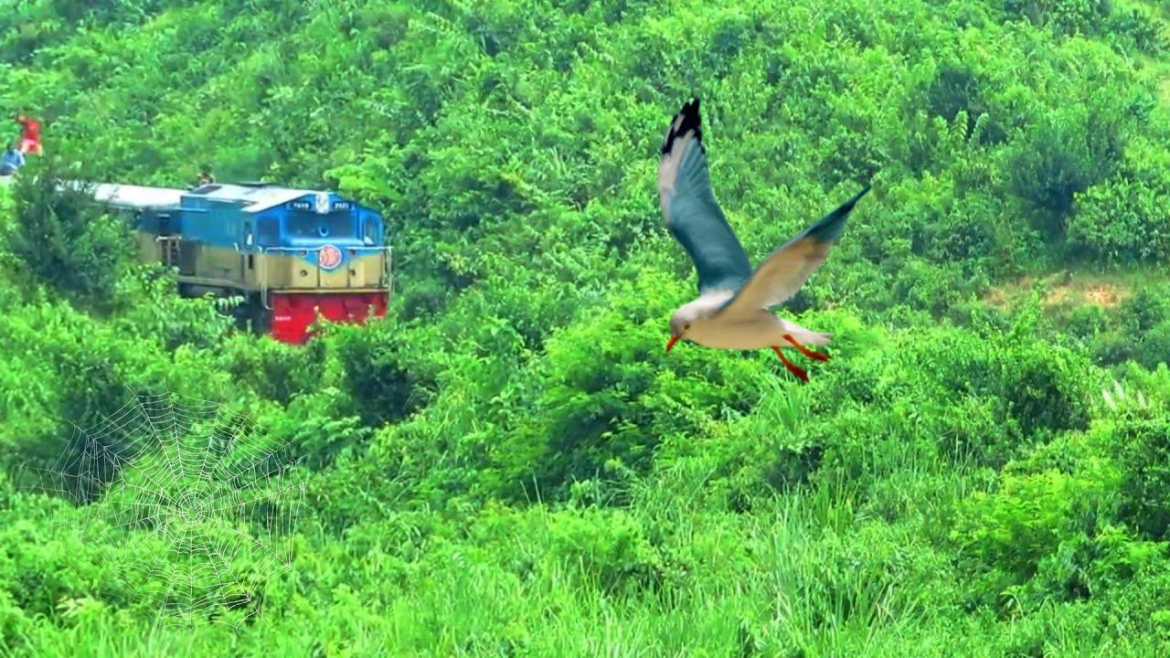Beautiful Bangladesh Railway || Hill View || শ্রীমঙ্গলের পাহাড় আর চা বাগানের মধ্যে ট্রেন যাবার দৃশ্য