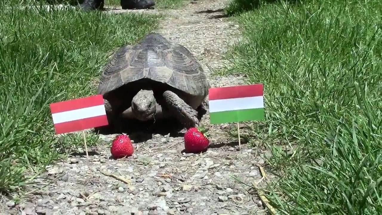 Prognose österreich Ungarn