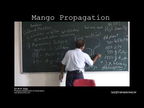 mango propagation