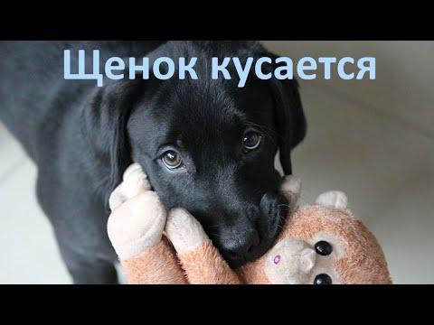 Вопрос: Как отучить собаку кусаться?