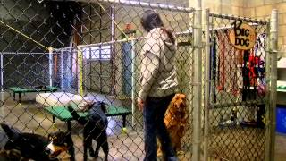 Dog Daycare Training - Door/gate Manners 1