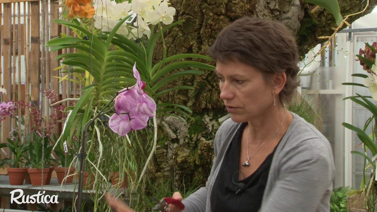 Comment S Occuper D Un Orchidée comment couper les tiges florales fanées sur une orchidée ?