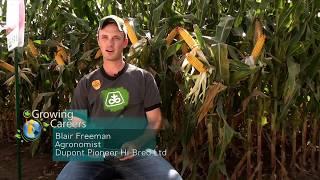 Career Profile: Area Agronomist