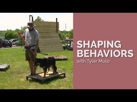 Dog Training York