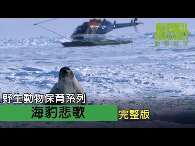 野生動物保育系列《海豹悲歌》完整節目
