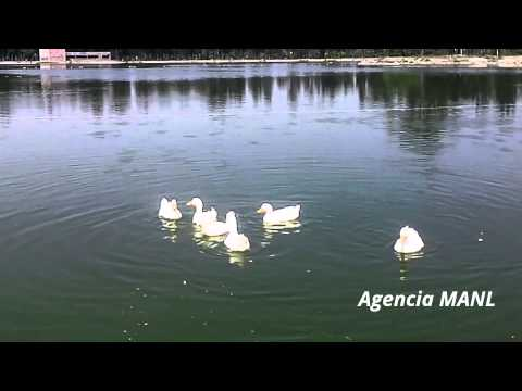 patos-en-el-lago-del-bosque-de-aragón