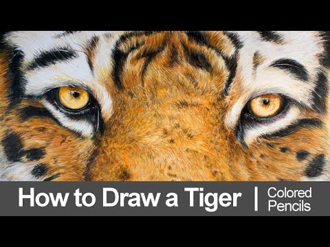 Line Drawing Of A Tiger S Face : How to draw a tiger with colored pencils youtube