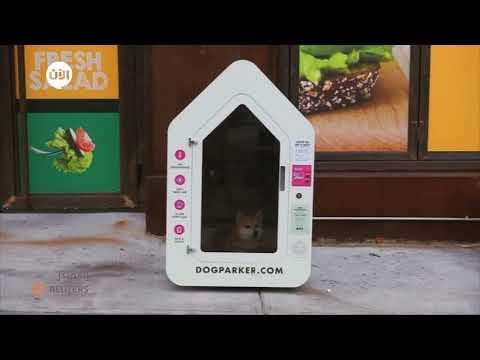 شاهدابتكار جديد في أمريكا.. الآن يمكنك أن تتسوق وتترك كلبك في هذا البيت الذكي المكيف  - نشر قبل 2 ساعة