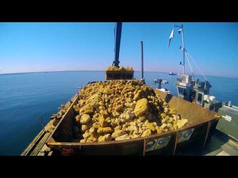 Port Phillip Bay Shellfish Reef Restoration Project - May 2017