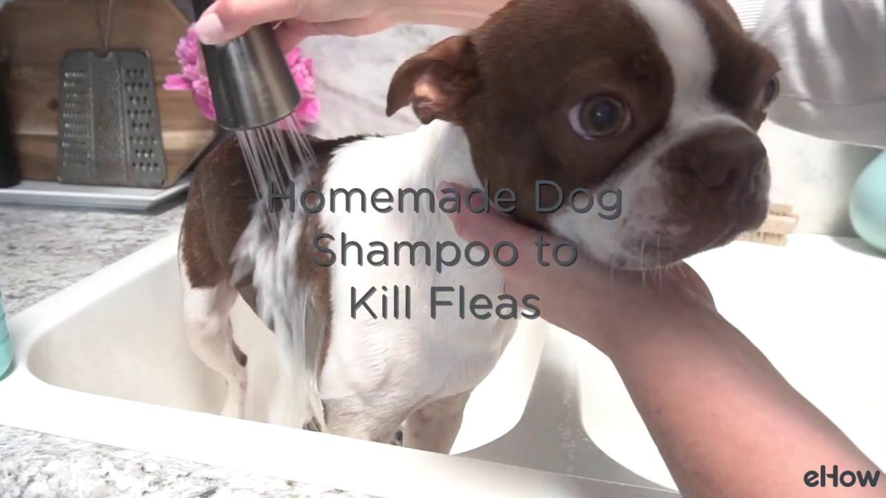 Homemade Flea Killing Shampoo - YouTube