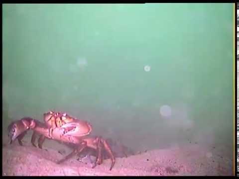 Underwater Camera - ROV 'Style' - Waterproof Ultrabright LED's AV Connect Double Ballast
