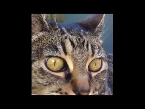 Funny cat video colaboration funpets cat and dog