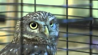 Узнайте всё о сове, вместе с зоологом Евгением Буяновер.