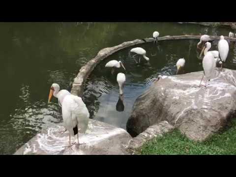 KL Bird Park 2016 Malaysia