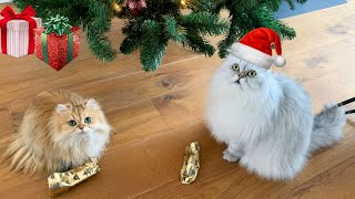 Cats Unwrapping Christmas Presents