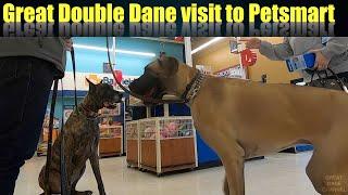 Great Double Dane Trip to Petsmart