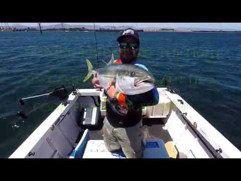 Kriticos Kingfish 2019 Port Augusta