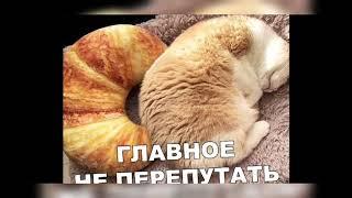 Лучшие приколы / лучший юмор / приколы с животными / новинки 2019