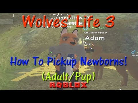 Roblox Wolves Life 3 How To Join Shyfoox Studios Group Hd - Roblox Wolves Life 3 How To Pickup Newborns Hd Youtube