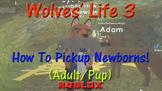 Roblox - Wolves' Life 3 - Comment pickup newborns! - HD
