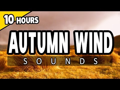 🎧 AUTUMN WIND - Wind Storm Sounds - 10 HOURS - Ambience SLEEP SOUNDS, for RELAXATION, Meditation