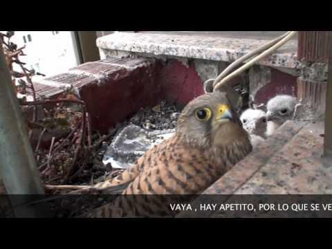 CERNICALO EN SANTANDER (VIDEO 8)