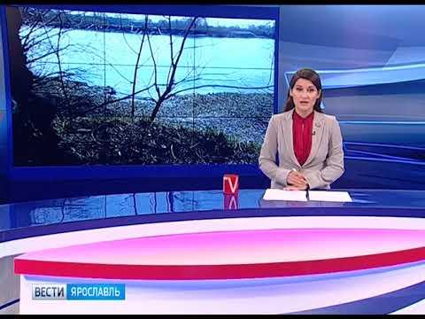 На реке Которосли в Ярославле поселился бобер