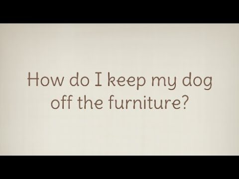 Ask A Dog Trainer How Do I Keep My Dog Off The Furniture Youtube