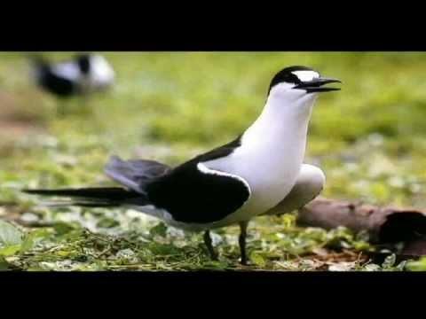 aves-de-rapa-nui-episodio-2