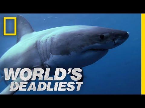 Shark Superpowers   World's Deadliest