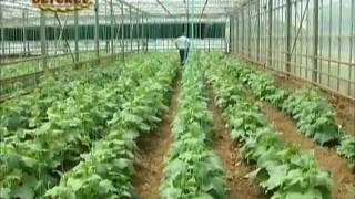 Örtüaltı Sebze Yetiştiriciliğinde İyi Tarım Uygulamaları (1) BATEM