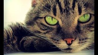 Как Можно Продлить Жизнь Своей Кошке