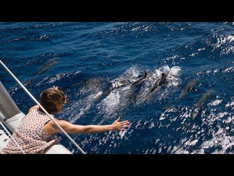 Bye Bye Bahamas - Sailing to Florida (s/v Curiosity)